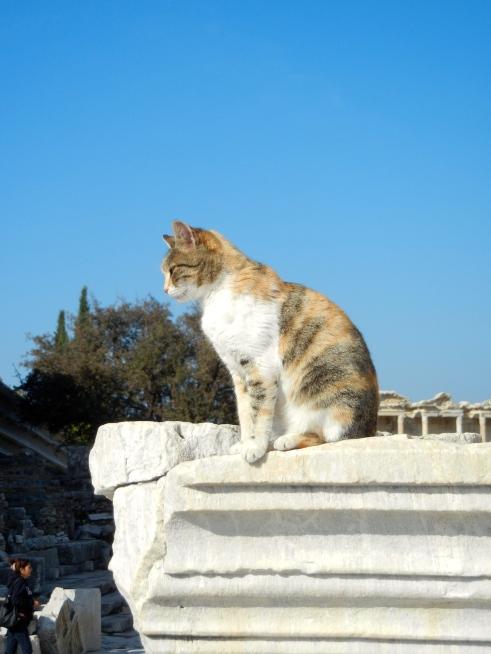 Watching Over Ephesus